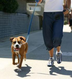 Бег с щенком