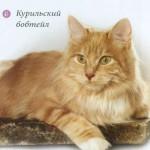 Бобтейл кошки