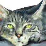 Болезни отдела мочевыводящей системы у кошек