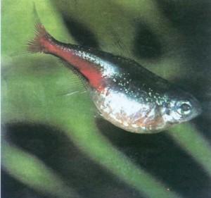 Болезни рыб, фото