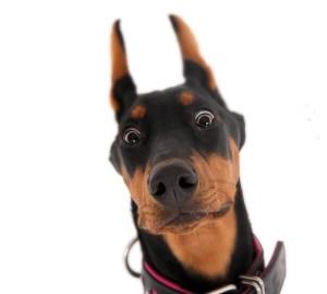 Бывает ли у собак инцест