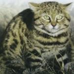 Черноногая кошка, фото