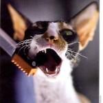 Chistka zubov koshek kormami
