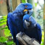 Chto zhe eto za ptitsyi – popugai