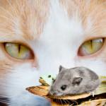 Диета для кошек при болезни почек