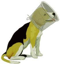 Елизаветинский воротник собака