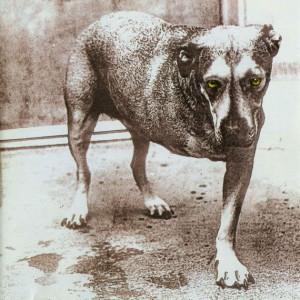 бег трехногой собаки