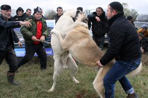 Как прекратить собачью драку