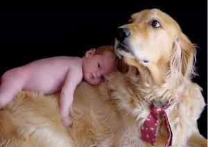 Как приучить собаку к младенцу