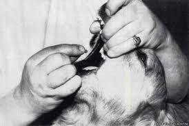 Как скормить собаке таблетку