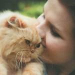 Как выбрать кошку
