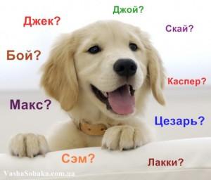 Как выбрать собаке кличку