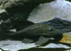 Камни для аквариума, фото