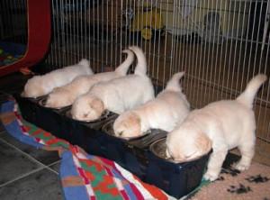 Консервированный корм для собак