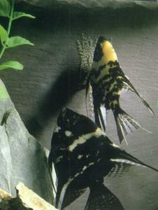 Кормление и выращивание рыбок аквариумных