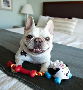 Кости-игрушки для собаки