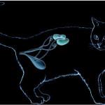 Лечение болезни почек у кошек