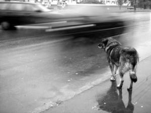 Может ли собака погибнуть от тоски