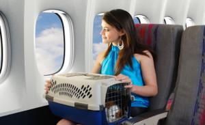 Можно ли брать собаку в самолет