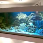 Na chto obratit vnimanie pri pokupke ryibok