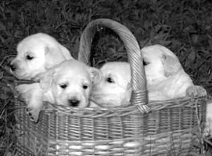 приучать собаку сидеть в сумке