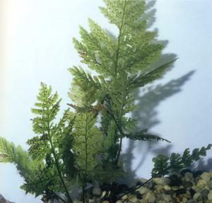 Не аквариумнымные растения