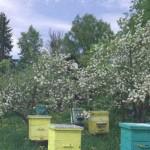 Период роения пчел