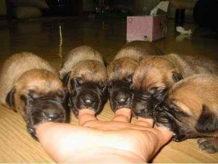 Фото собачьи соски