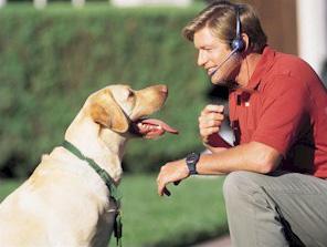 Понимают ли собаки человеческий язык