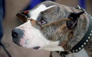 Породистая или беспородная собака