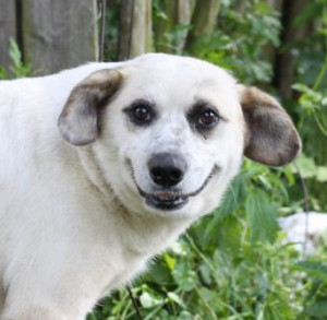 Характеристики пород собак