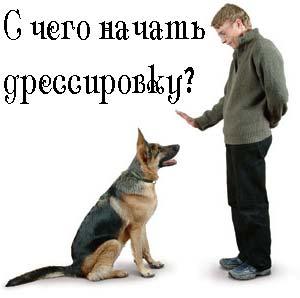 Проблема при дрессировке собак