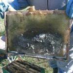 Работы в день выставки пчел