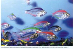 Раскрашеные рыбки, фото
