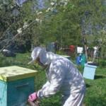 Расширение пчелиного гнезда весной