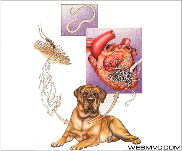 кашель от глистов симптомы
