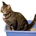 Симптомы болезни почек у кошек
