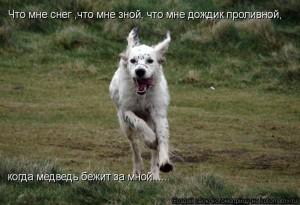 Сколько может пробежать собака