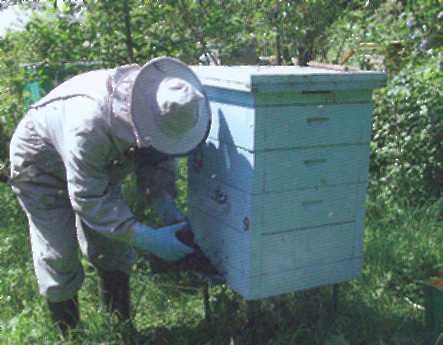 Сколько раз качают мед