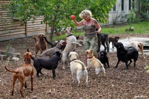 Собачий детский сад
