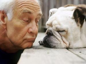 Собачий возраст по человечески