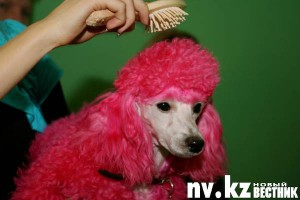 Собачья жизнь гламурных псин
