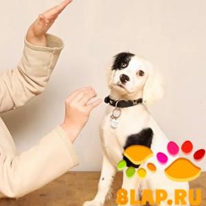 Собака глуха