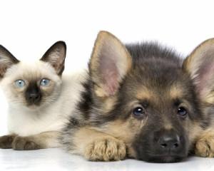 Собака и кошка вместе