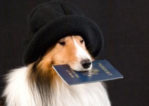 Собака и отпуск
