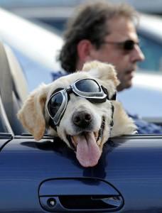 Собака на переднем сиденье авто