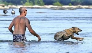 Собака на воде