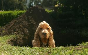 Почему собака скребет пол или землю