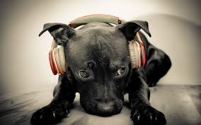 Собака слушает радио