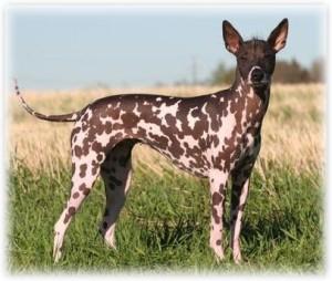 Солнцезащитный крем для собаки
